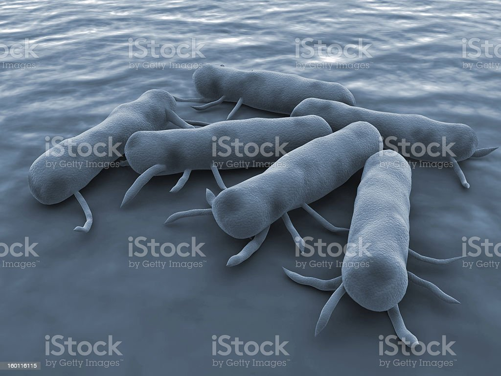 Salmonella Bacteria royalty-free stock photo