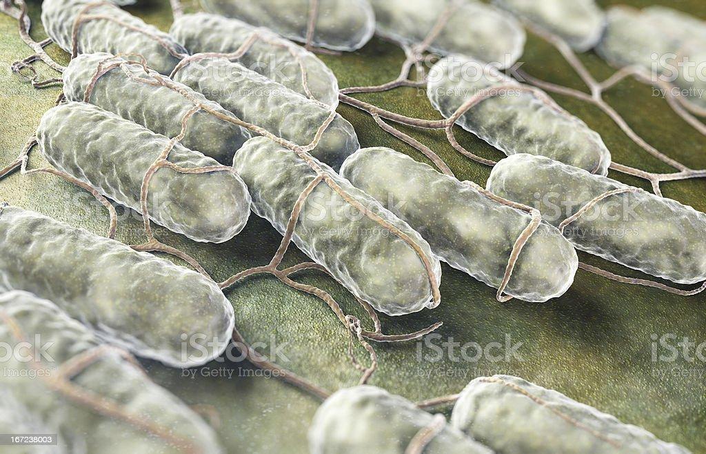 Salmonella bacteria stock photo