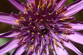 Purple flower with yellow pollen