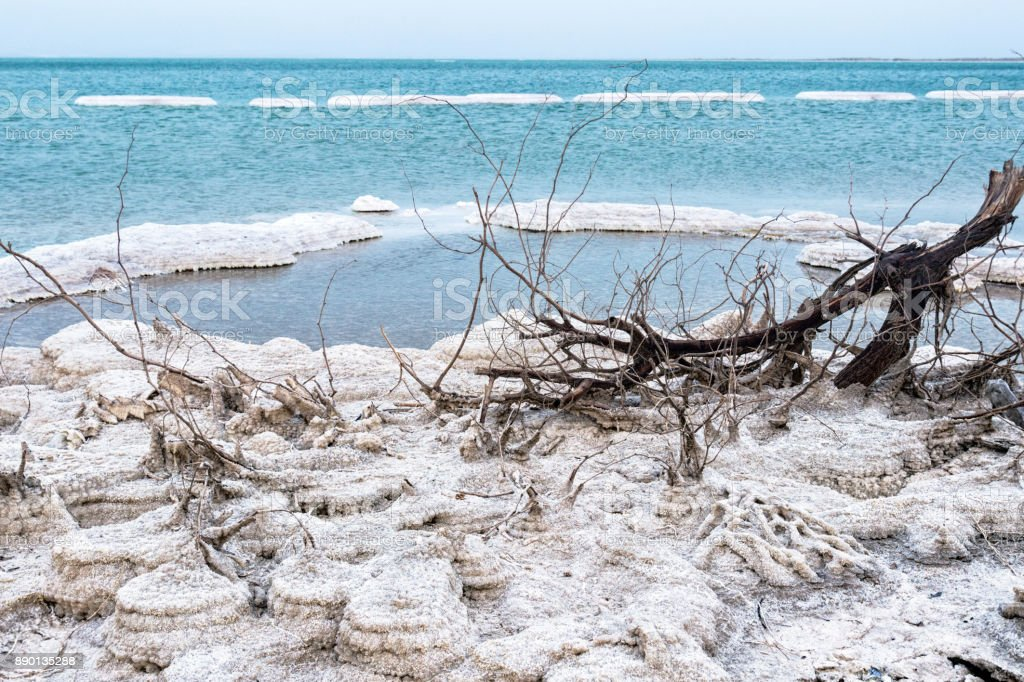 Salt deposit with a tree branch in the Dead Sea stock photo