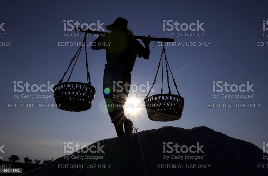 Salt farmer carry salt to be stored stock photo