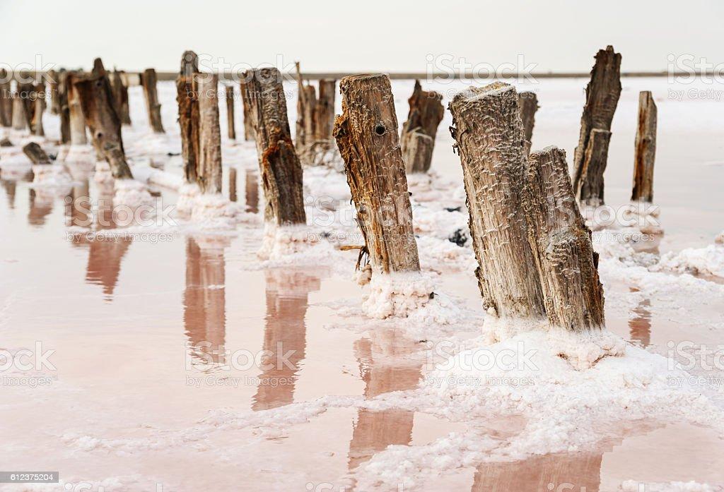 Salt Lake with pink water. stock photo