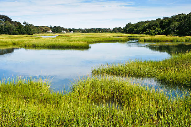 Salt Marsh at Full Tide Twice a day the waters of a healthy coastal salt marsh are refreshed by the tides bringing fresh nutriants to the plants and  animals which live there. cape cod stock pictures, royalty-free photos & images