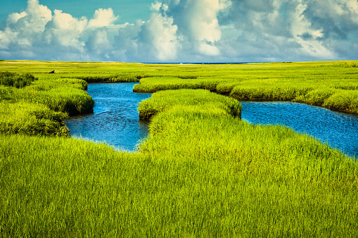 The soft green hues of springtime decorate  the salt marsh on Cape Cod at Mid Tide.  Due to tidal action, fresh nutrients are pumped through twice daily as the tide changes.