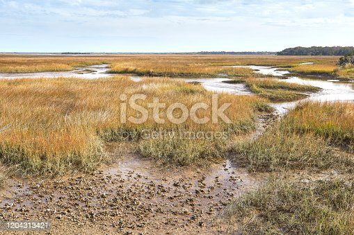 istock Salt Marsh in Duval County, Florida 1204313421