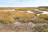 View of a tidal creek and salt marsh from a trail in the Timacuan Preserve in Jacksonville, Florida