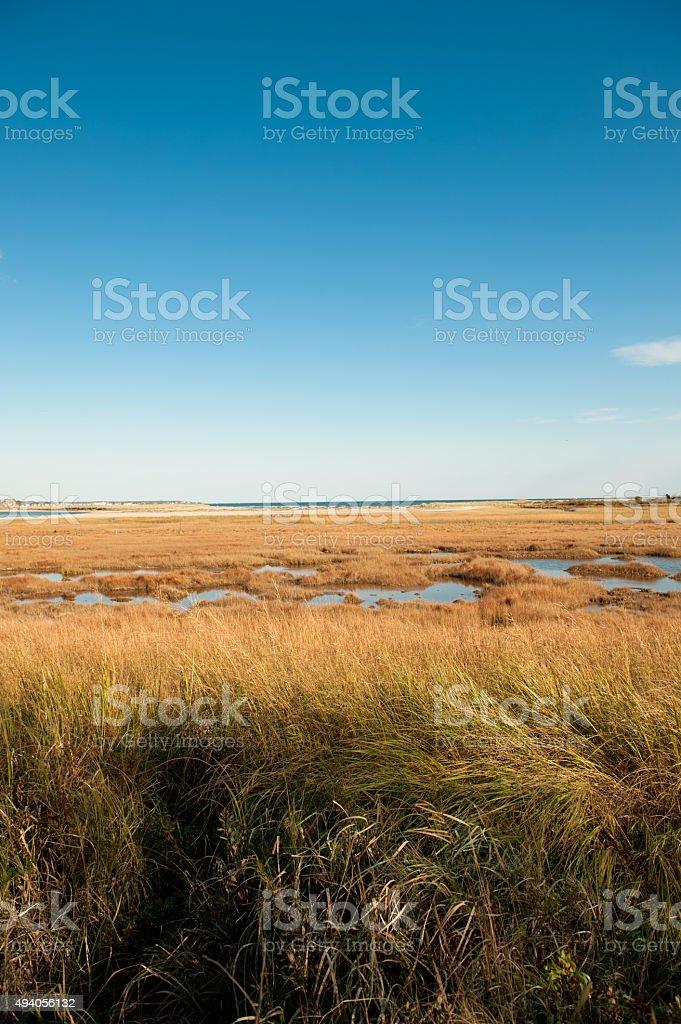 Salt Marsh in Maine in Autumn stock photo