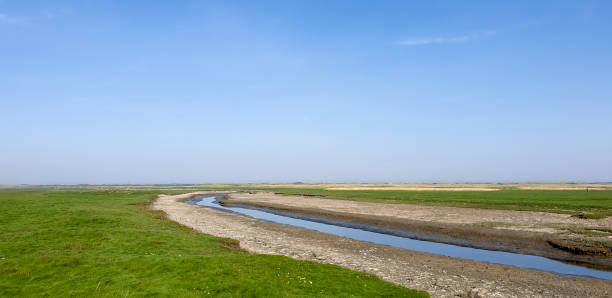 Salt marsh landscape stock photo