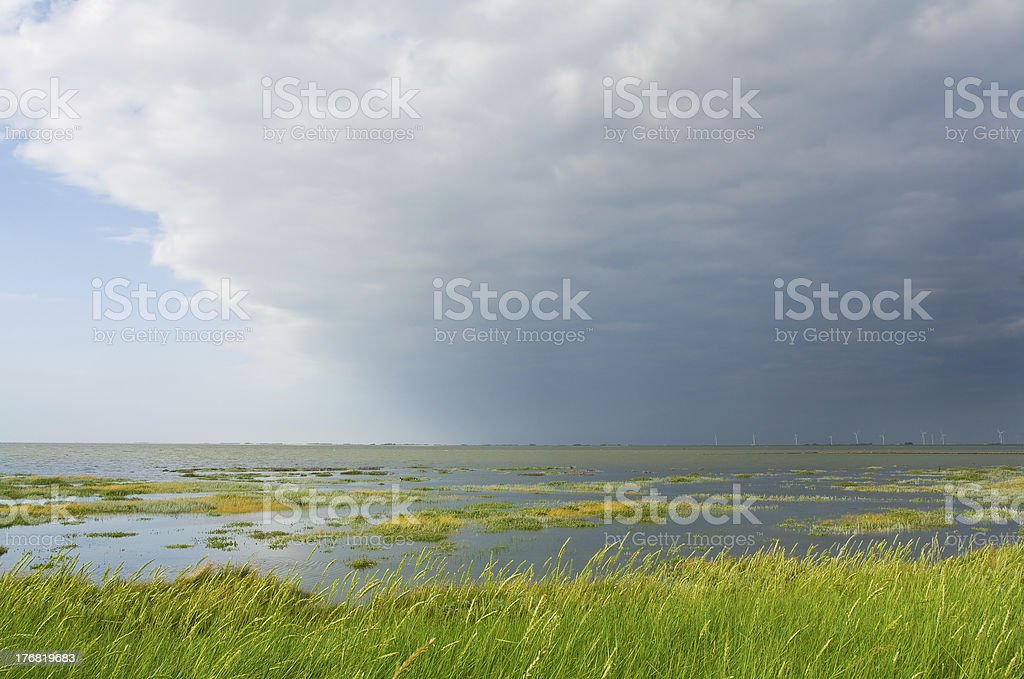 Salt marsh royalty-free stock photo