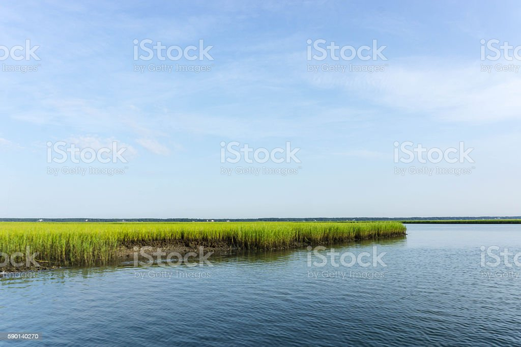 salt marsh stock photo
