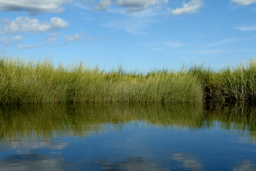 This picture was taken from a canoe on the Scarborough Salt Marsh in Scarborough, Maine. The photo is divided into three areas: blue sky with small cumulus clouds above, a central band with tall, dense grass along a wetlands river bank, and the bottom area, reflected into the calm water, are deeper shades of green and blue from the grass and sky.
