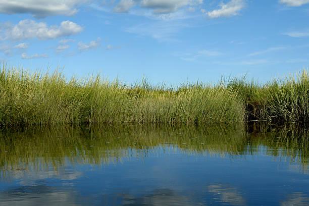 marsh com grassy margem do rio sal - estuário imagens e fotografias de stock