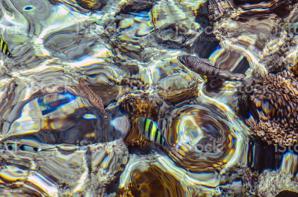 Salt water and fish stock photo