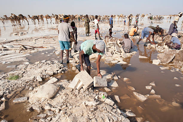salt workers in the danakil desert, ethiopia - horn of africa stock photos and pictures