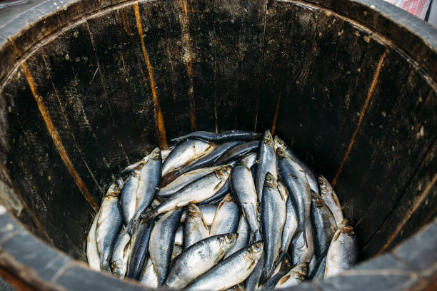 salted fresh herring fish in wooden oak barrel, healthy seafood - herring stock photos and pictures