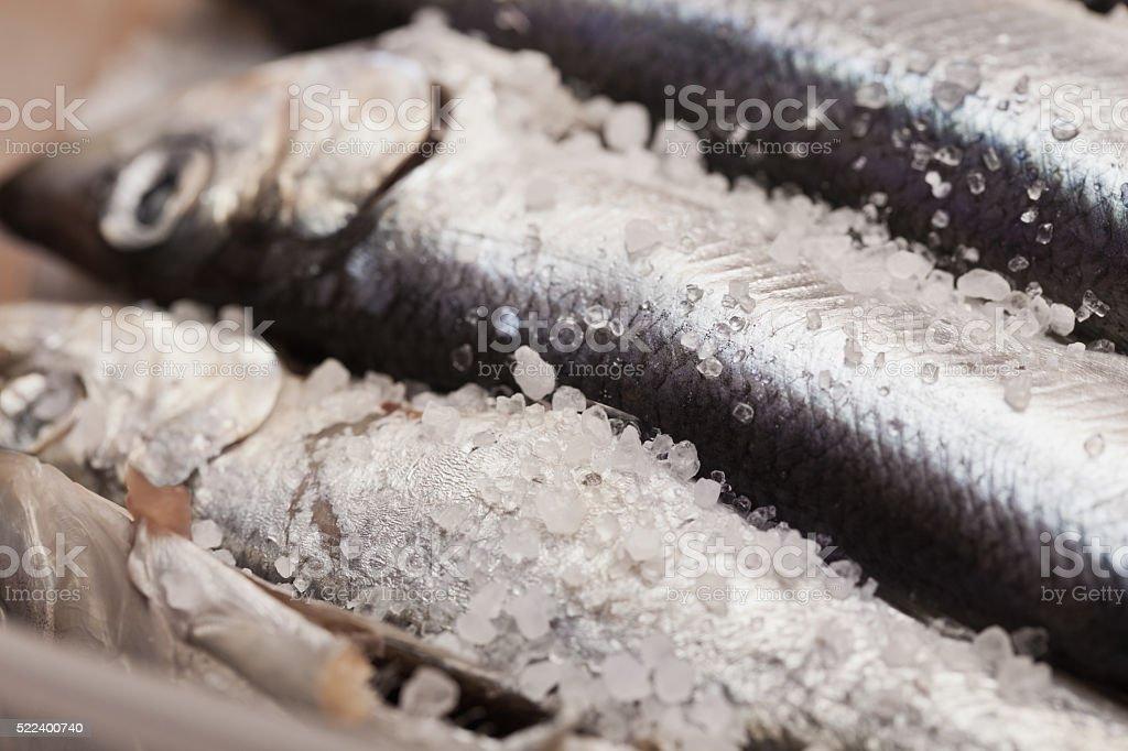 Salted Herring close up stock photo