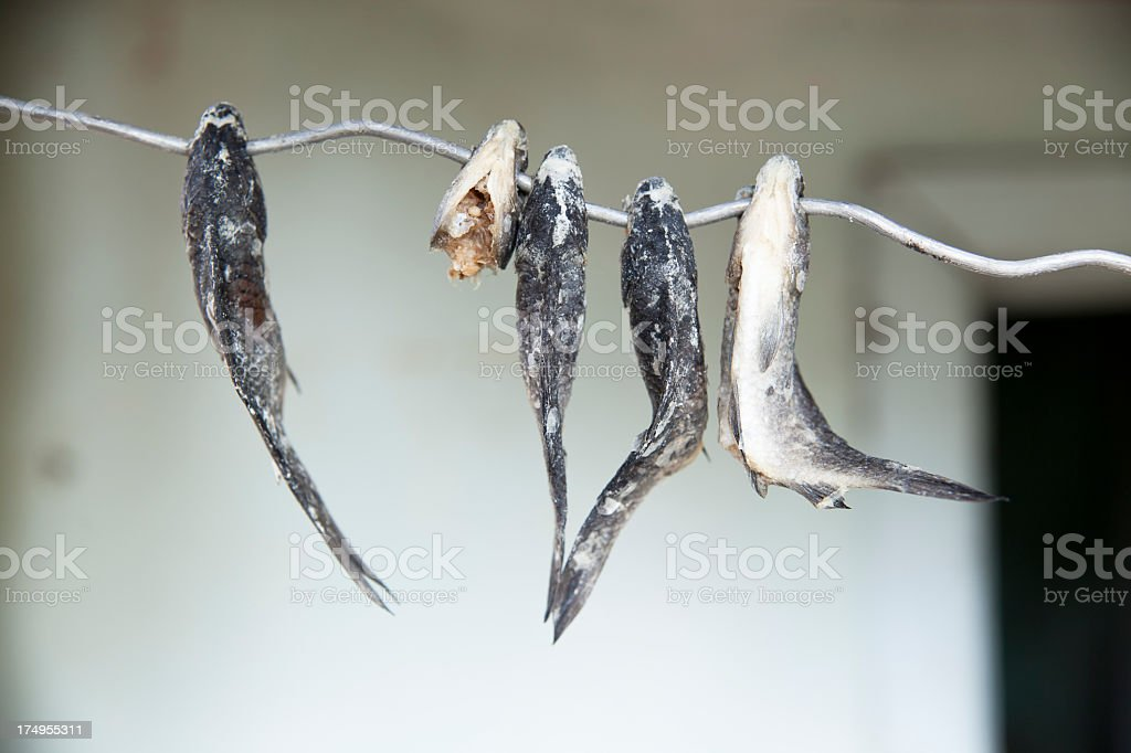 Salted homemade fish royalty-free stock photo