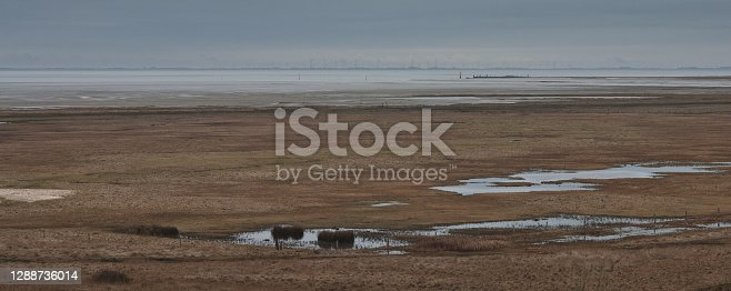 istock Saltflats on Northsea island Spiekeroog 1288736014