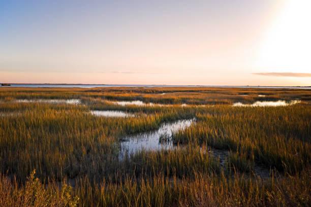 saltmarsh on the virginia coast in usa in the golden sun at sunset. - estuário imagens e fotografias de stock