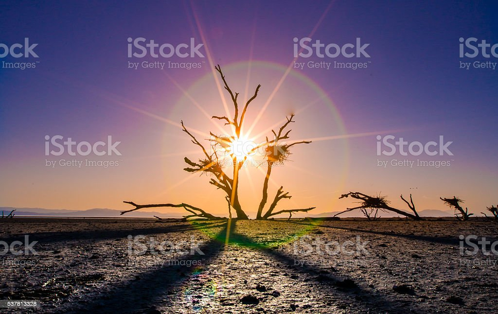 Salton Sea Nests stock photo