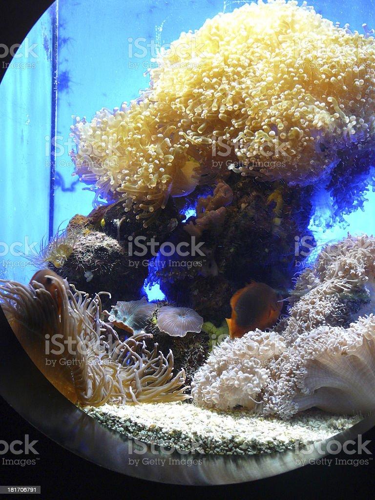 Saltwater aquarium with corals, anemone and fish stock photo