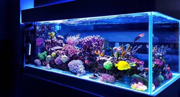 Saltwater coral reef aquarium fish tank Reef aquariums are one of the most beautiful addition in our homes polyp corals stock pictures, royalty-free photos & images