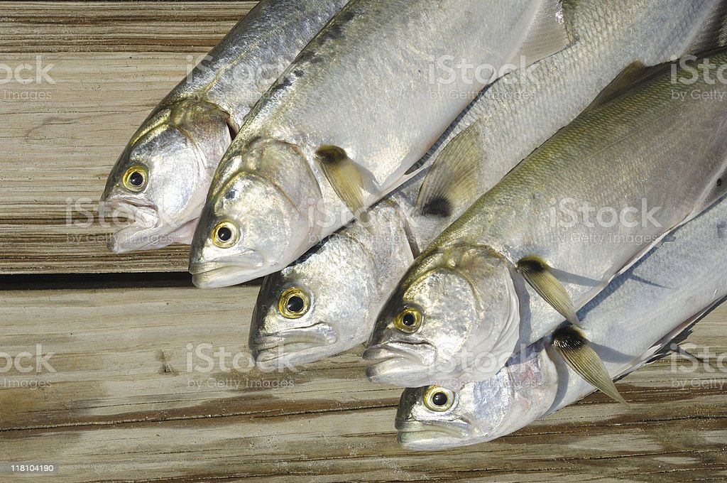 Saltwater fish on a wooden dock stock photo