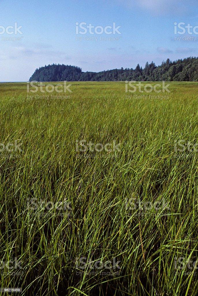 Saltwater Marsh and Headland royalty-free stock photo