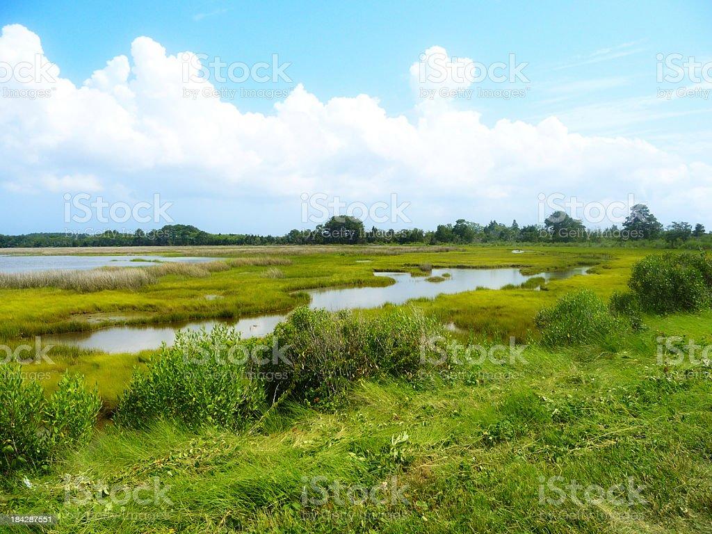 Saltwater Marsh stock photo