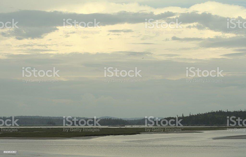 Saltwater Marsh royalty free stockfoto