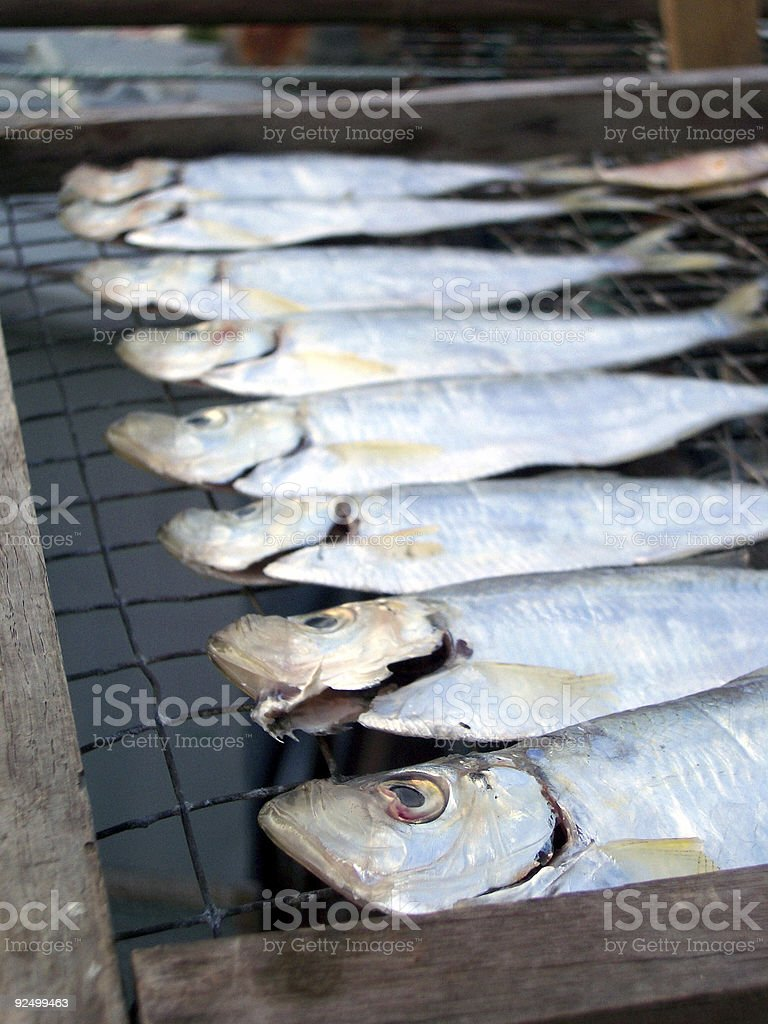 salty dried fish royalty-free stock photo