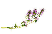 Salvia sclarea, clary, or clary sage  Isolated on white background.