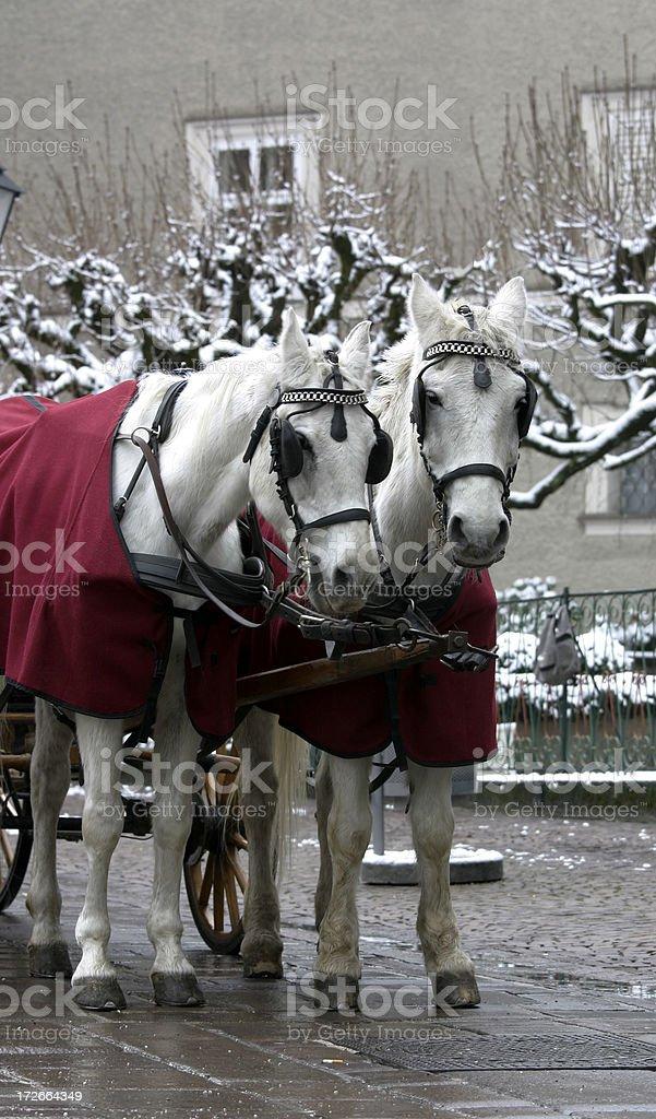 Salzburg Carriage Horses royalty-free stock photo