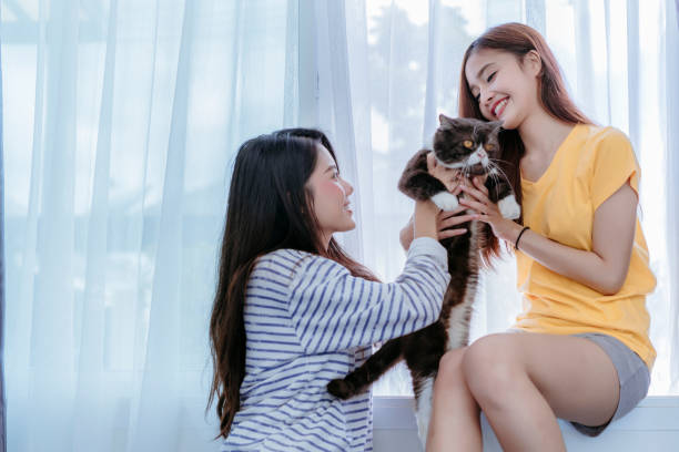 Same sex asian lesbian couple lover playing cute cat pet in the bedroom at morning happiness feeling, LGBT sexuality female living together at home. stock photo