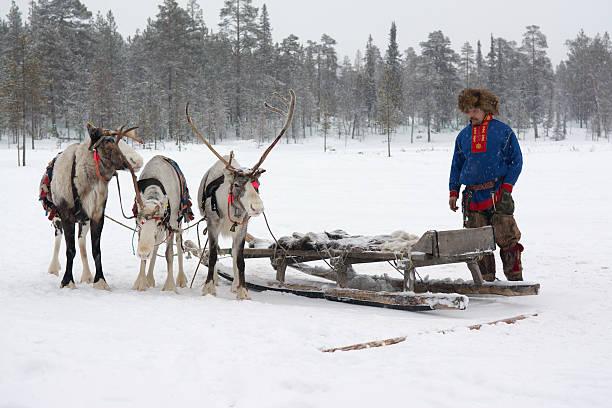 Sami national costume near the reindeer stock photo
