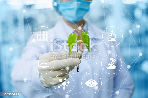 istock Sample of a plant in the hands of a biotechnologist . 957855490