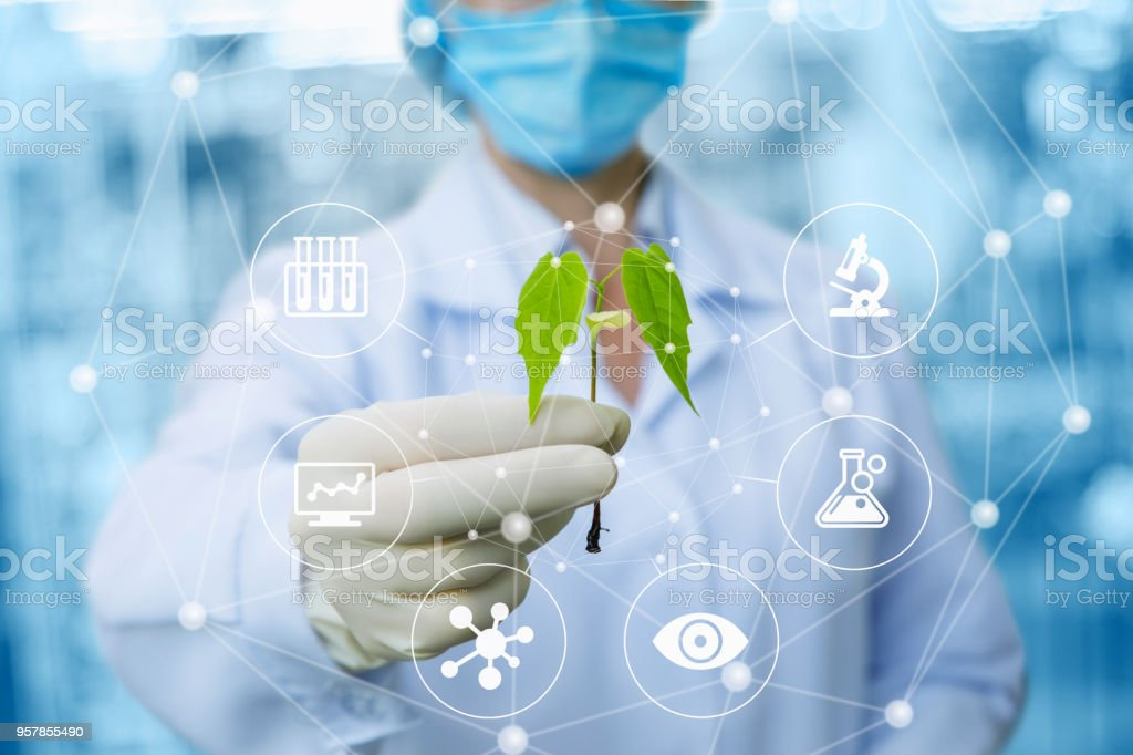 Sample of a plant in the hands of a biotechnologist . stock photo