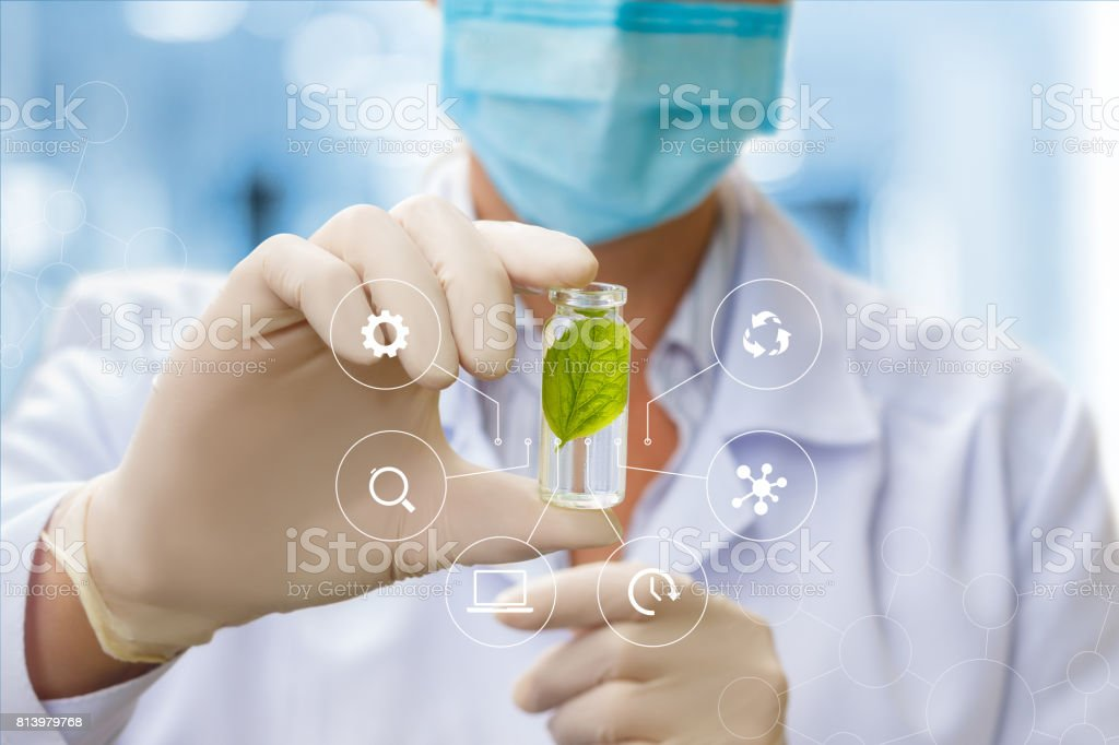 A sample of plants in the hands of a specialist. - foto stock