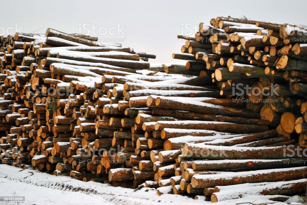 Samples of sawing trees under the snow stock photo