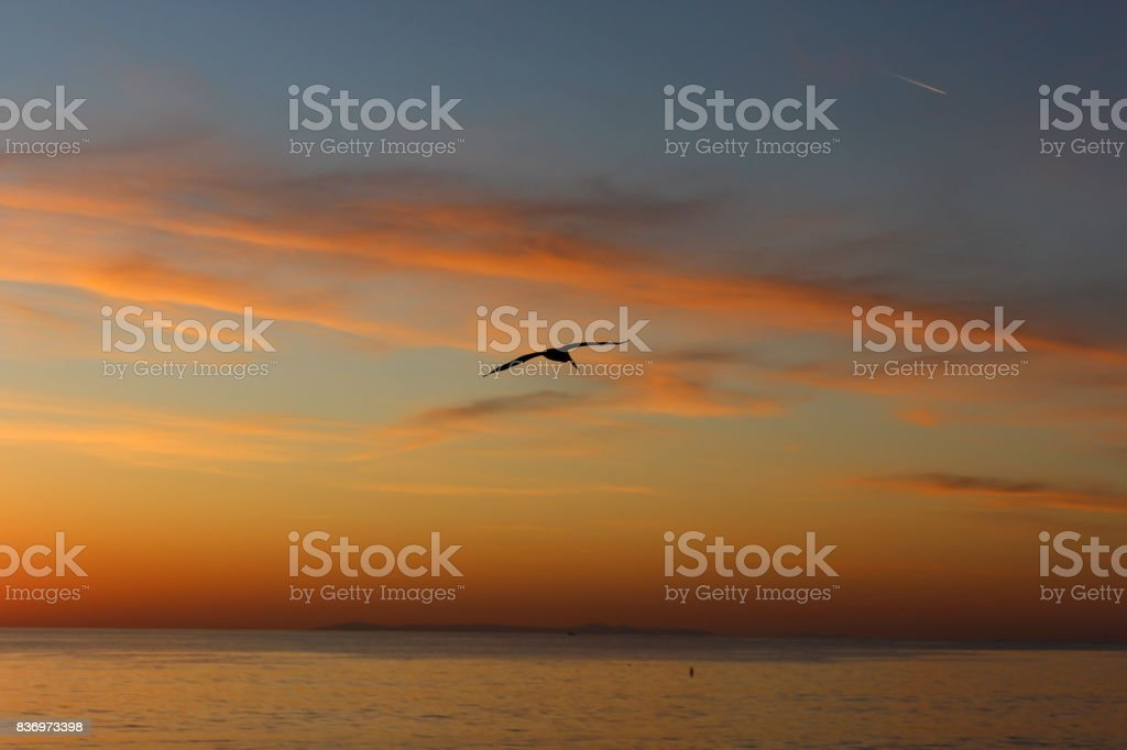 San Clemente Seagull Sunset stock photo