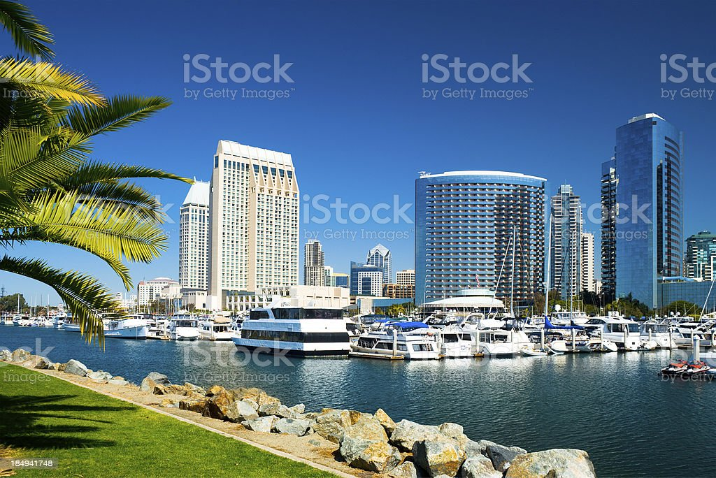 San Diego skyline and palm tree stock photo