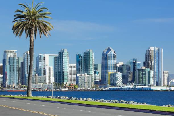 San Diego Skyline + Palm Tree stock photo