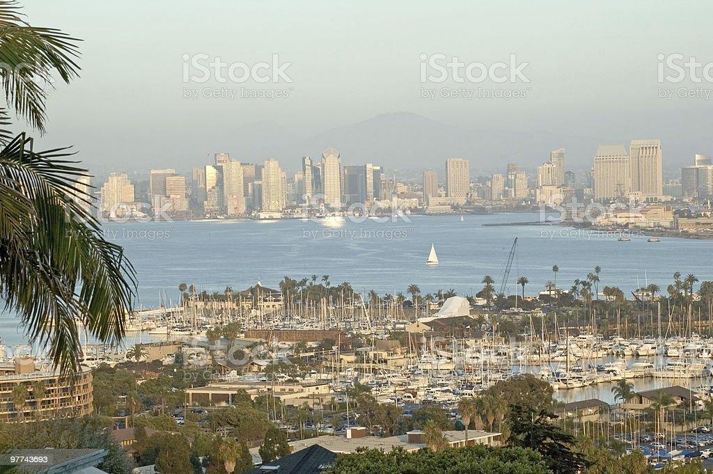 San Diego Skyline with Palm Tree stock photo