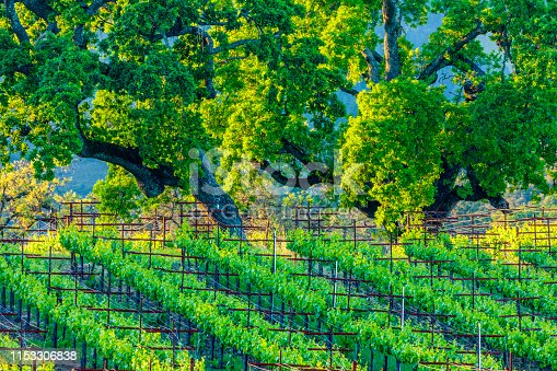 Sonoma Valley vineyards in the San Francisco Bay area of California