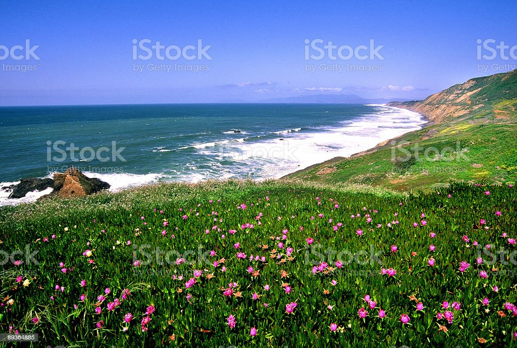 San Francisco Bay Shore royalty-free stock photo