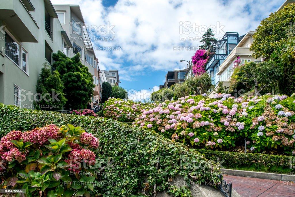 San Francisco Kalifornien Usa 29 August 2018 Lombard St Garten An