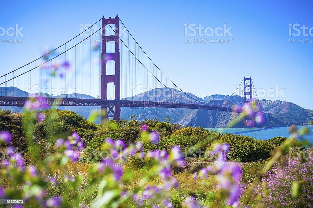 San Francisco Golden Gate Bridge and Flowers in Summer, California stock photo