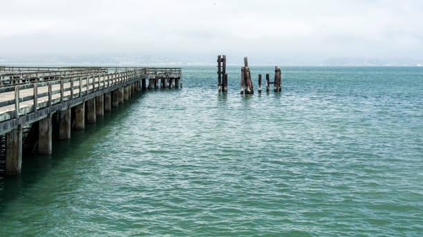 san francisco municipal pier - organizm wodny zdjęcia i obrazy z banku zdjęć