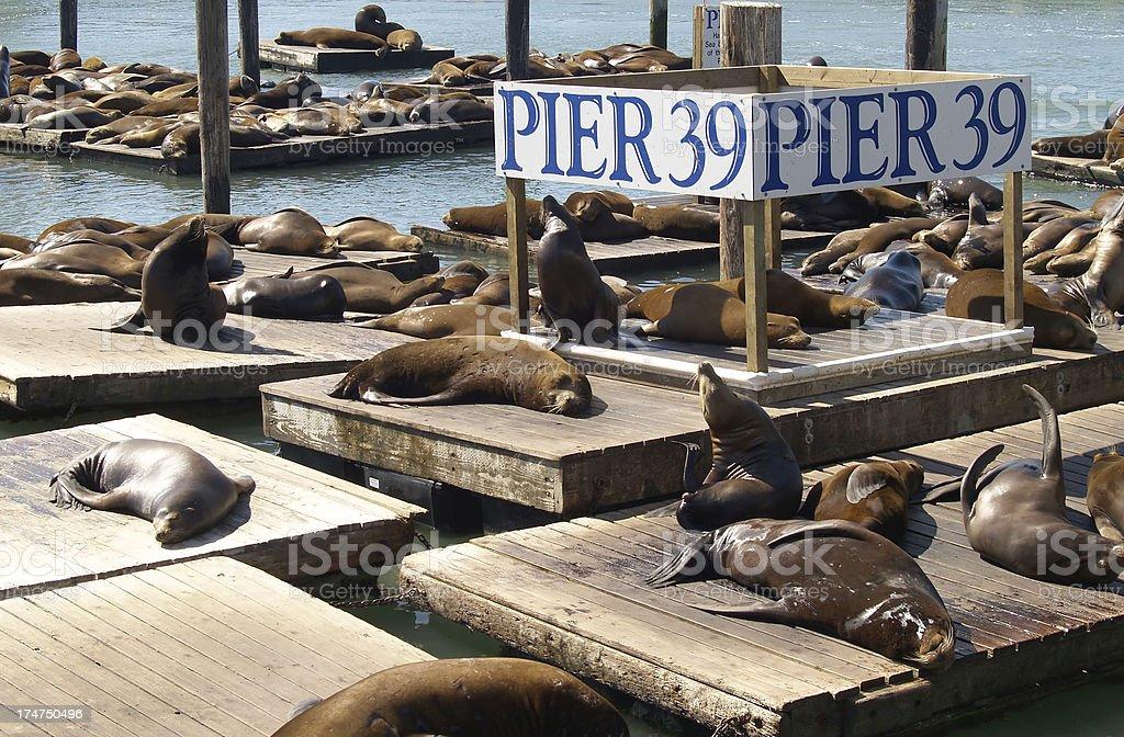 PIER 39 - San Francisco royalty-free stock photo