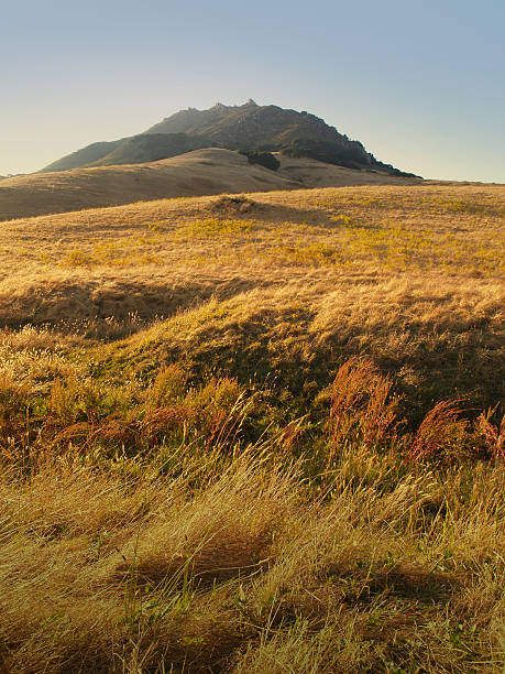 san luis obispo rolling hills with tall grass - central coast california stock photos and pictures
